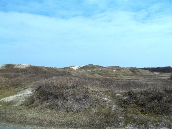 Norderneyer Dünen