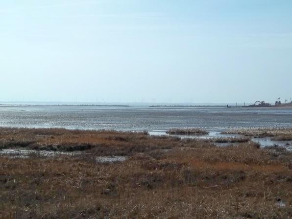 Wattenmeer und Salzwiesen vor Norderney